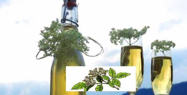 Как се прави сок от бял бъз? А сироп? Рецепта за лимонада. Противопоказания