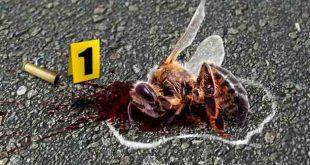 Петиция призовава за нощно пръскане на нивите: Да спасим пчелите на България от отравяне