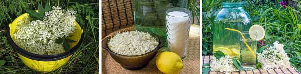 Рецепти за освежаваща и лековита бъзонада. Бъзът цъфти сега, през май!