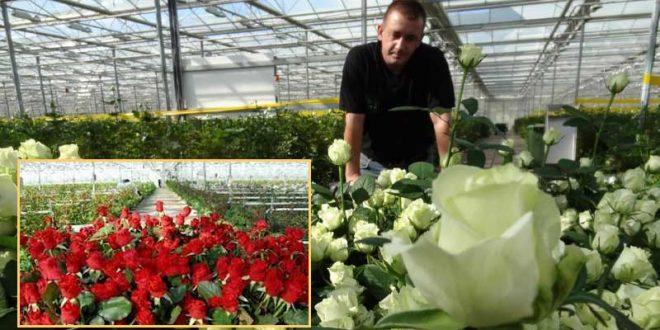 Отглеждане на рози. Вкореняване, резитба, размножаване